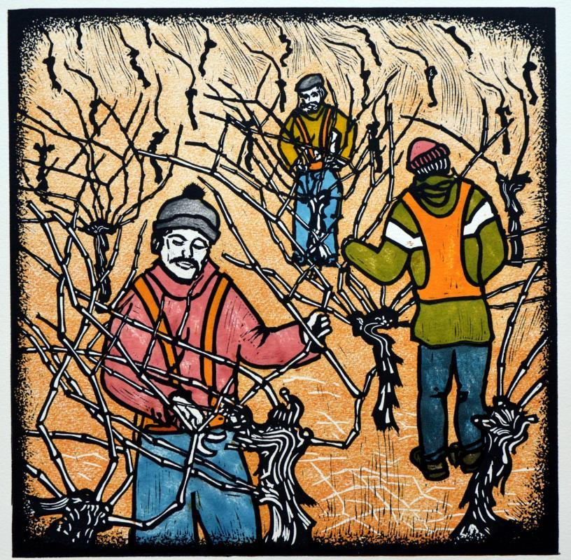 Tailler les vignes